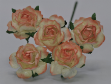ORANGE PEACH PINK FLORIBUNDA (2.5-3.0cm) Mulberry Paper Roses